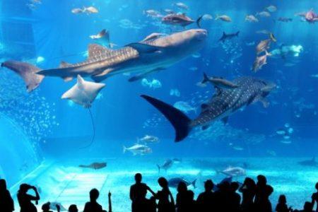 小さい子どもと一緒に水族館